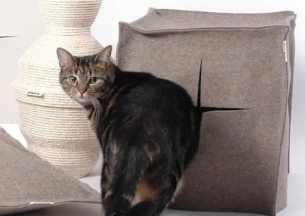 Catsinstylemain6_3