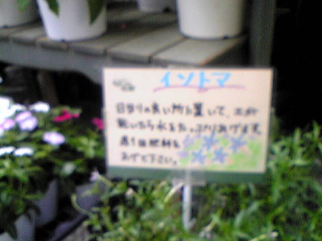 Yamaguchi_san_no_ichimai_image018
